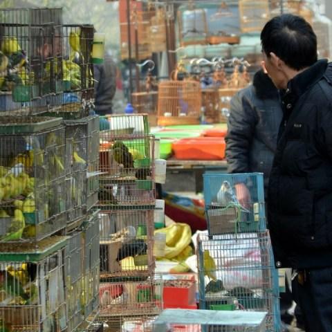 Buenas-Noticias-China-cerrará-todos-los-mercados-de-aves-vivas 07/07/20