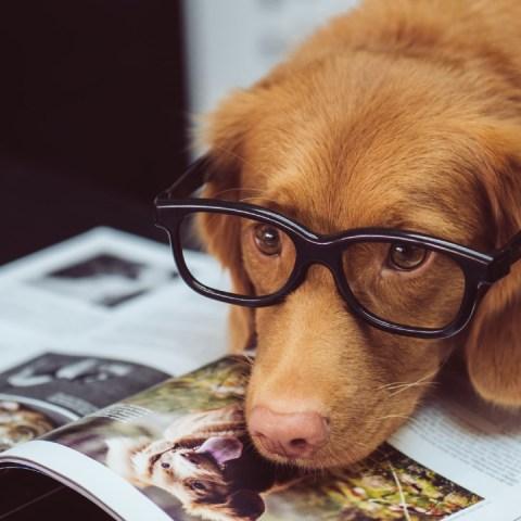 Los perros tienen noción del tiempo y pueden adivinar la hora