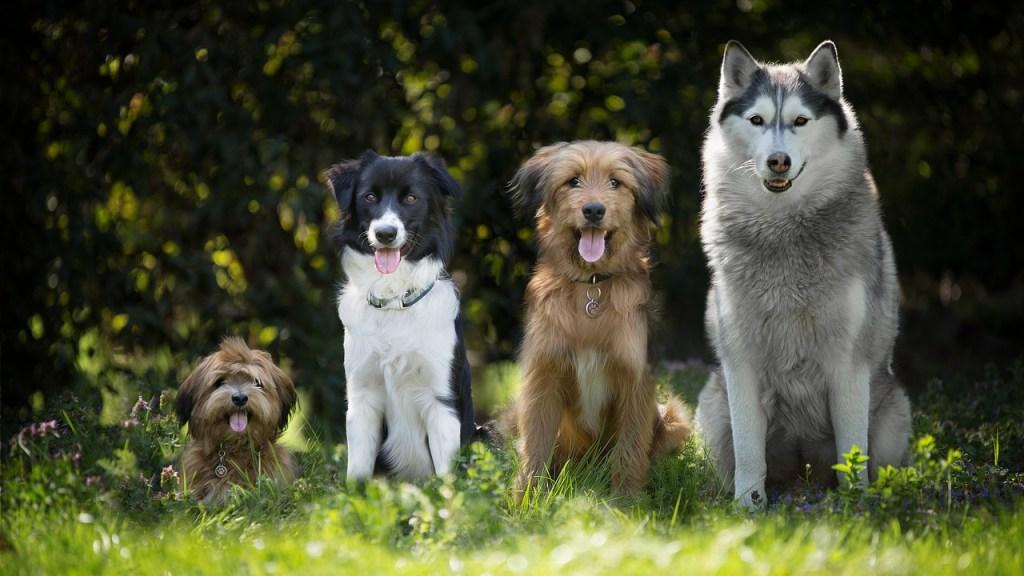 Qué-tan-abusado-es-tu-perro-Según-psicólogo-estas-son-las-razas-más-inteligentes 28/07/20