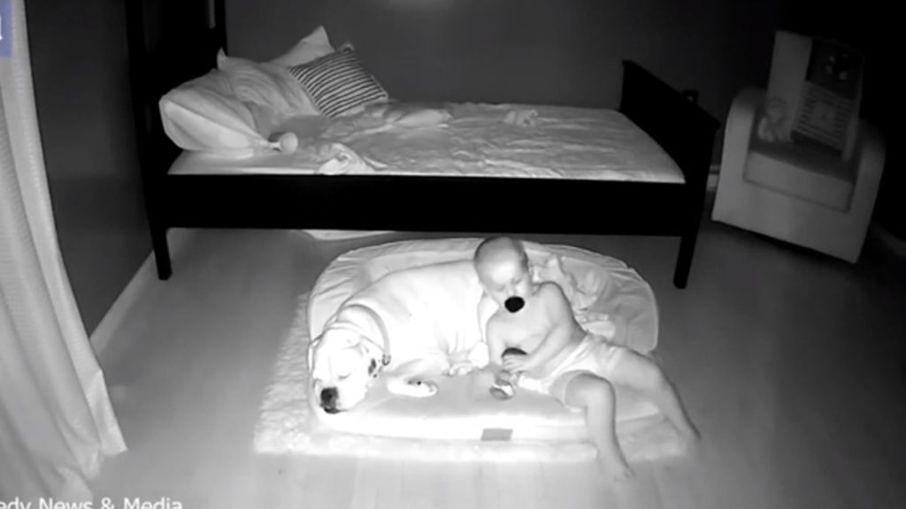 Un bebé se escapa de su cama para ir a dormir con su perro y lo captan en video