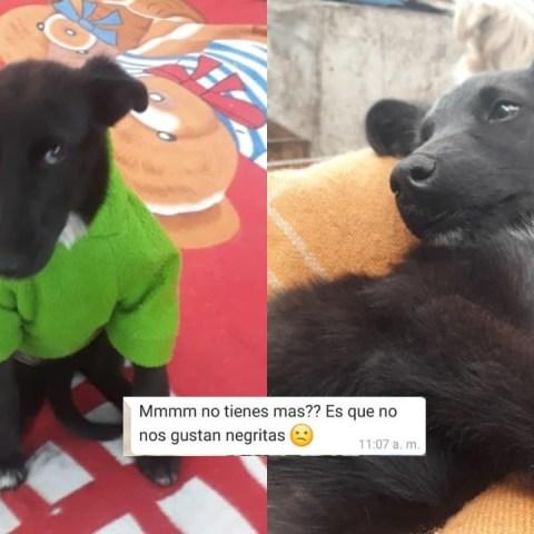 Tabata-perrita-negrita-perros-adopcion-6-de-julio-2020