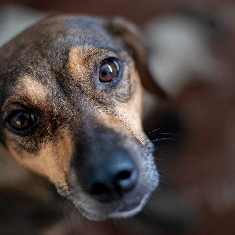 Adoptar a un perro criollo o callejero es la mejor opción ¡ahora más que nunca!