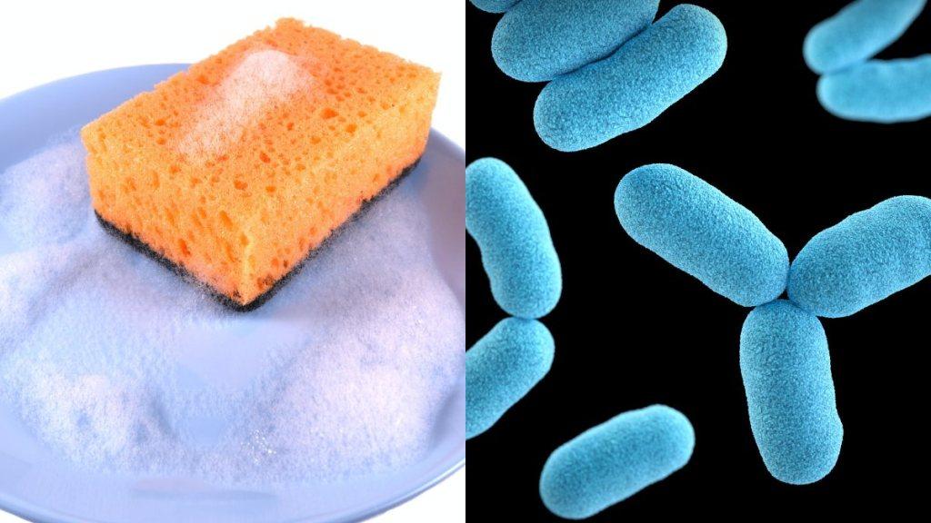 Las esponjas de cocina usadas para lavar los trastes son un nido de peligrosas bacterias