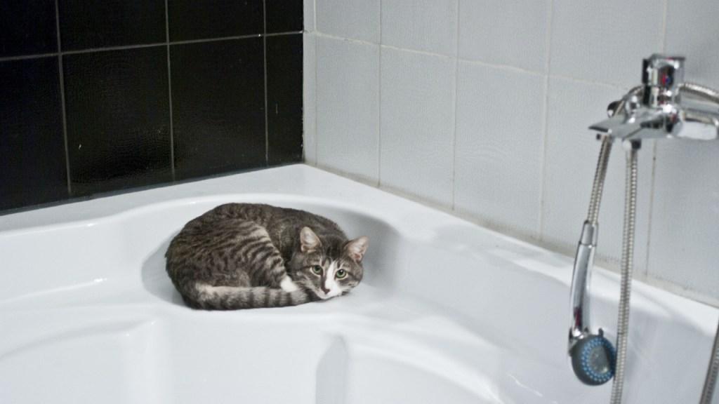 ¿Cómo debo bañar a mi gato?