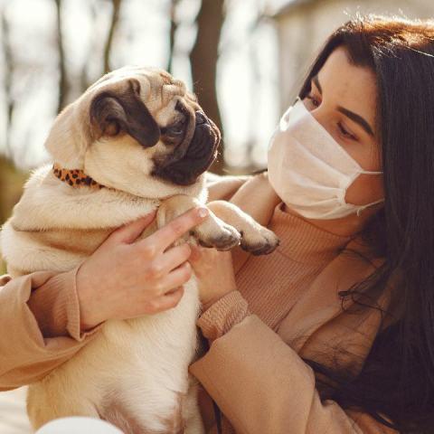 perro desinfectar