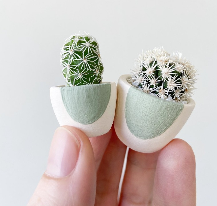 cactus minitatura