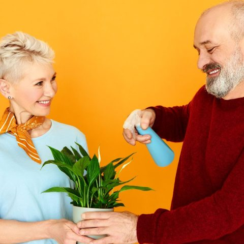 abrillantador para plantas de interior