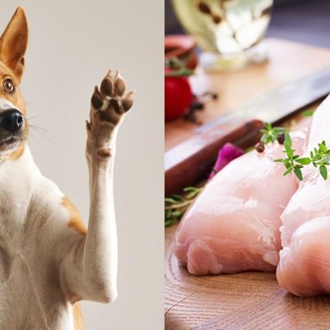 perros pollo