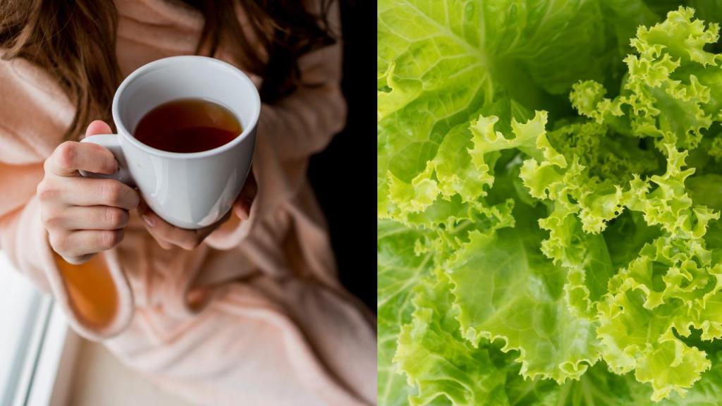 té de lechuga para dormir mejor