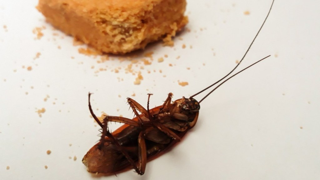 cosas que atraen a las cucarachas a tu casa
