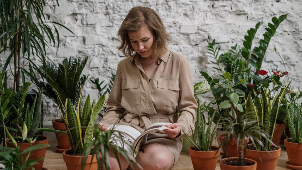 hierbas para eliminar malas energías