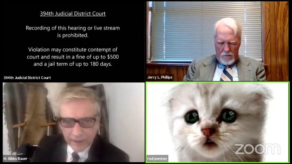 abogado comparece con filtro de gato por error