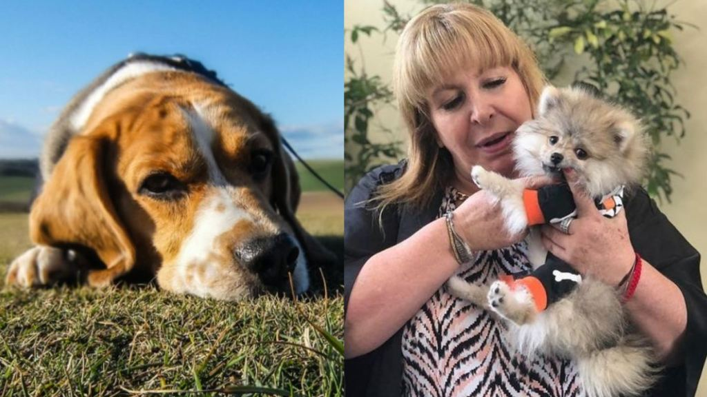 magda rodriguez y tomasito como les afecta a los perros la muerte