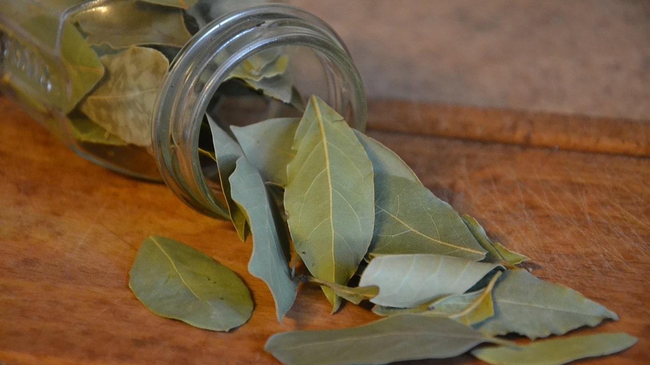 hojas de laurel beneficios propiedades medicinales esotéricas