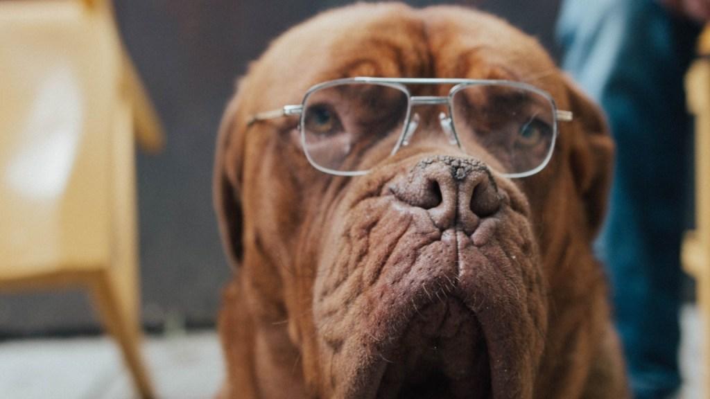 que alimentos debe comer perro viejito