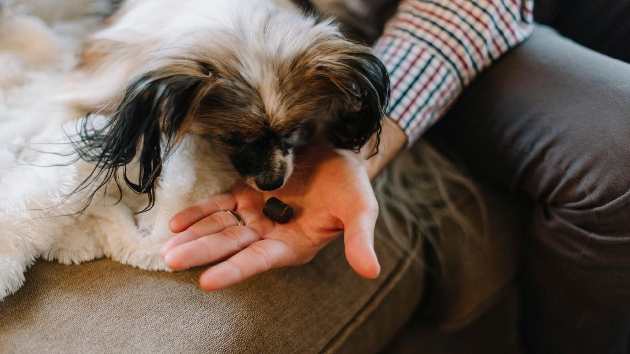 el chocolate les hace daño a los perros