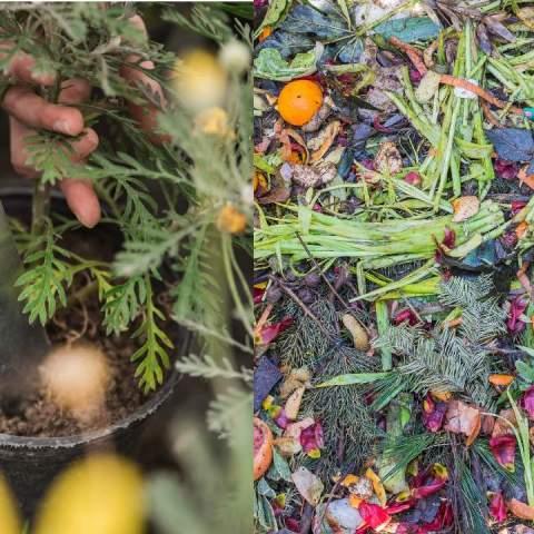alimentos abono fertilizante plantas composta basura orgánica