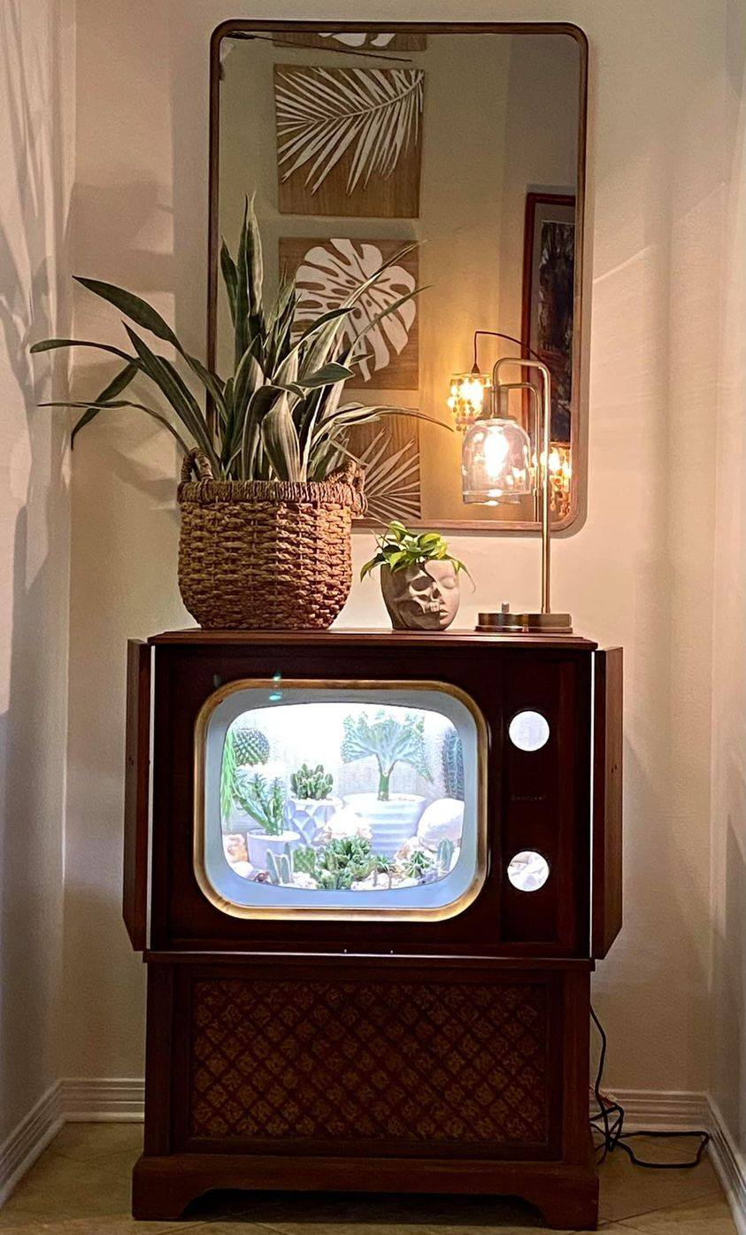 convirtio su televisión en terrario terrarium forma