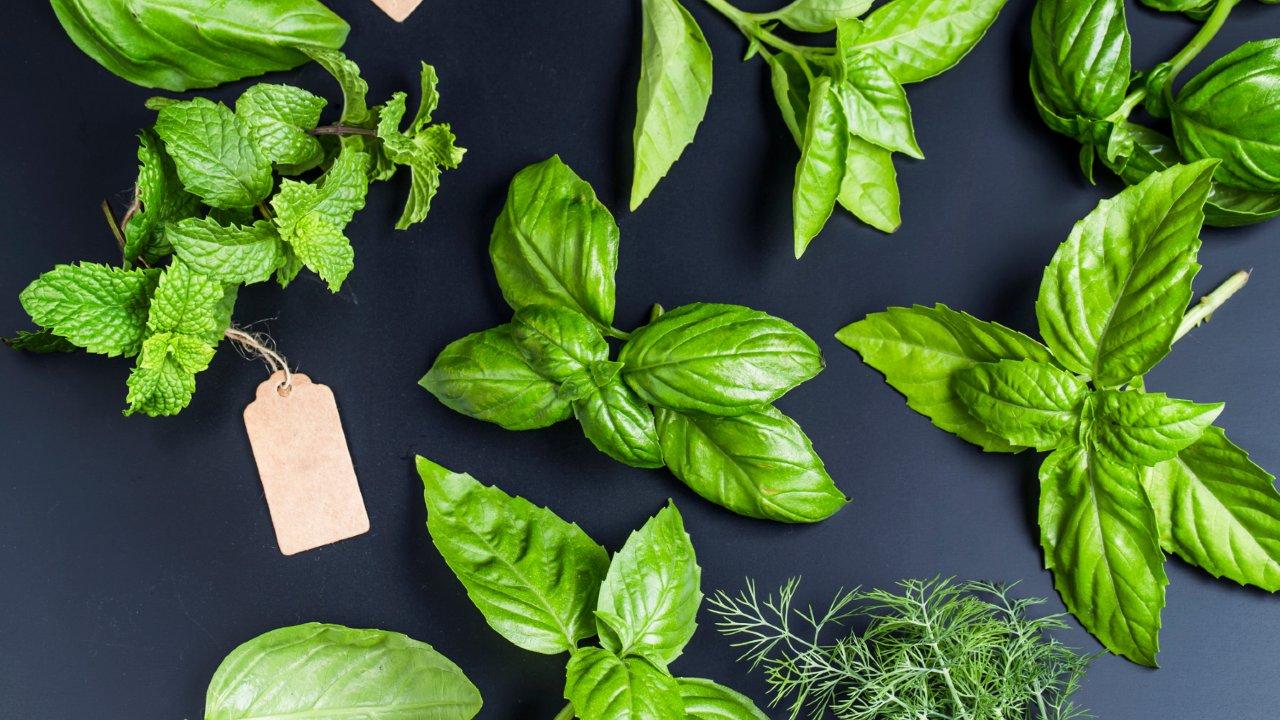 plantas aromáticas cuidado mantenimiento cultivo usos