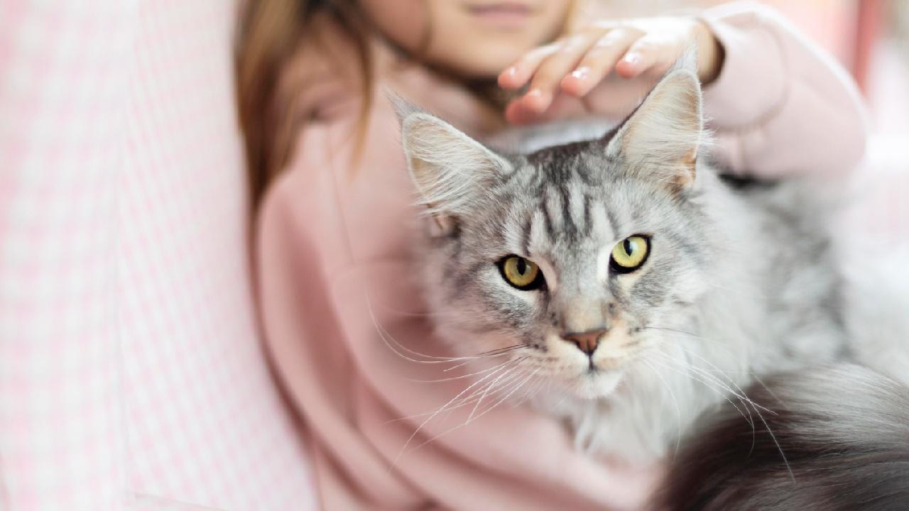 cosas de humanos que odian los gatos