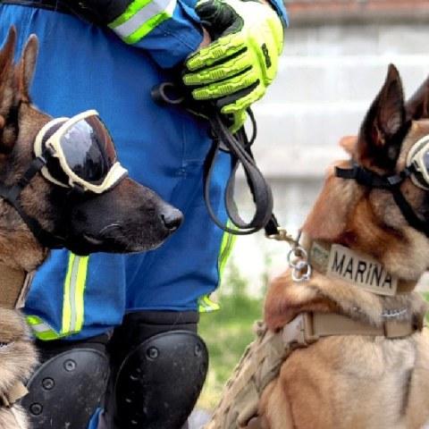 ecko y evil perros rescatistas línea 12 del metro