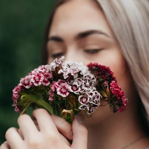 flores aromáticas que necesitas para tu jardín dentro de casa