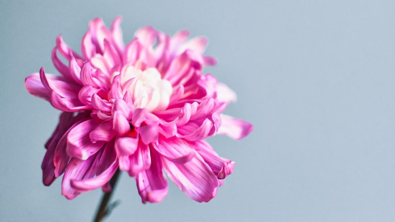 que flores son mejores para regalar dia de las madres