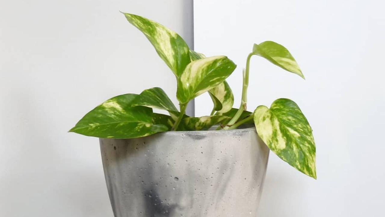 plantas que no hay que tener en casa