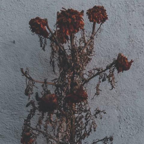 que significa encontrar flores en la puerta de tu casa