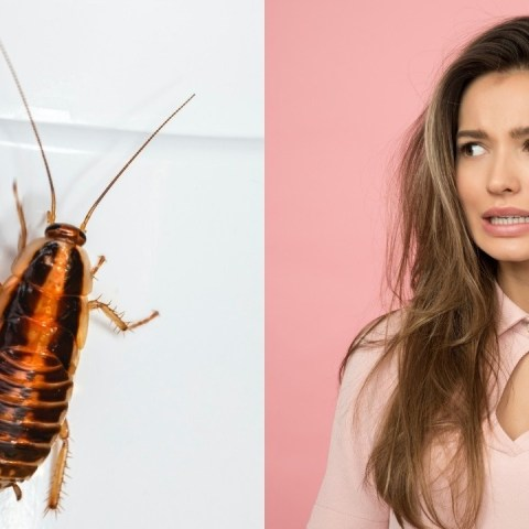 por que no se debe aplastar a cucarachas