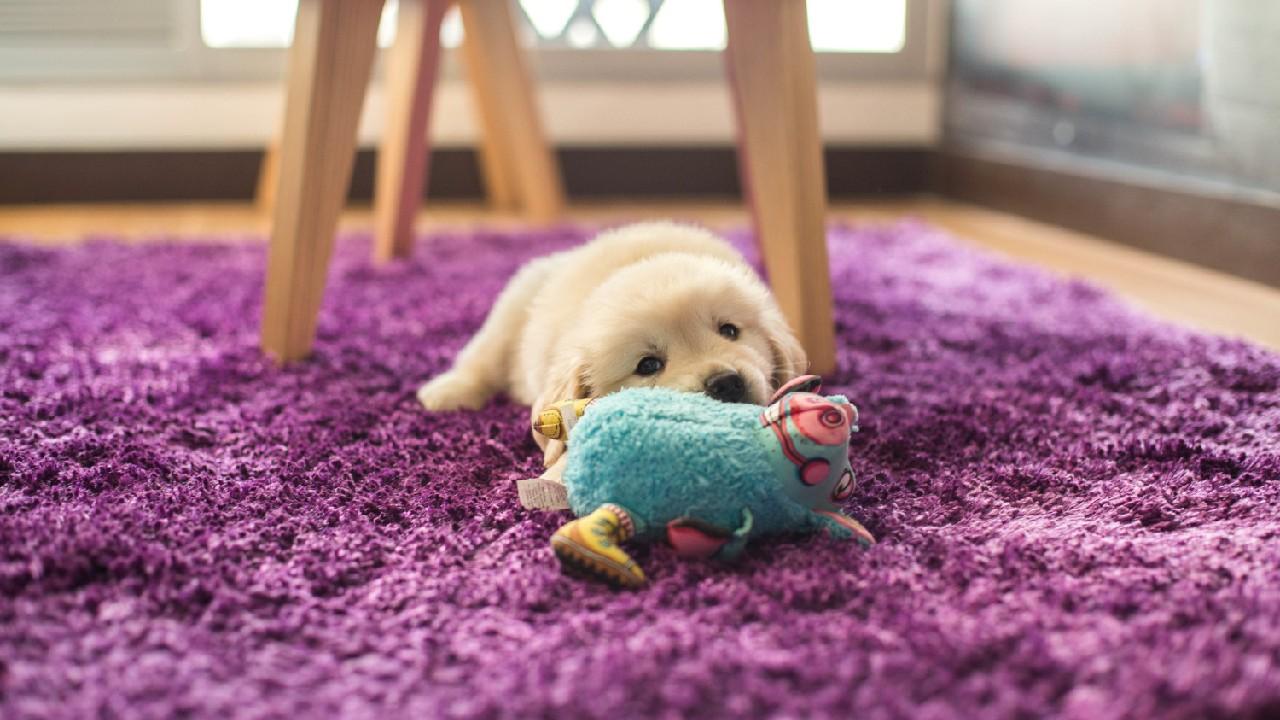 perros lomitos mascotas juguetes que hacen ruido los mejores para ellos