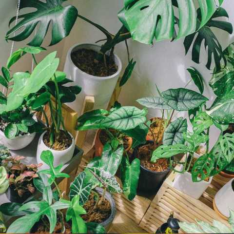 plantas que no deben estar dentro de casa