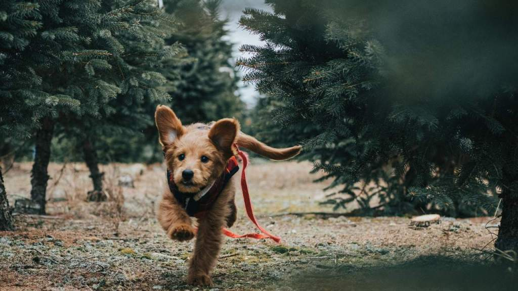 Por que mi perro empieza a correr de la nada explicacion