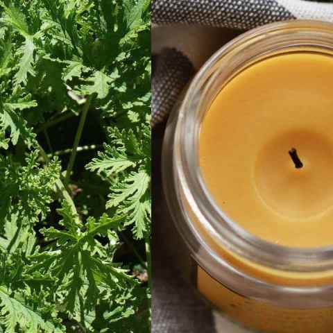 Cómo hacer velas de citronela antimosquitos