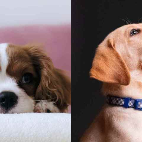 Cómo entrenar a tus perros con vinagre