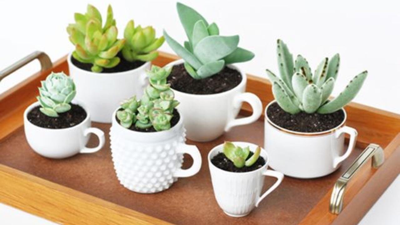 maceta para plantas de sol