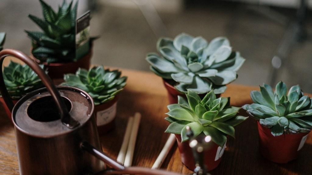 cómo reproducir plantas suculentas paso a paso