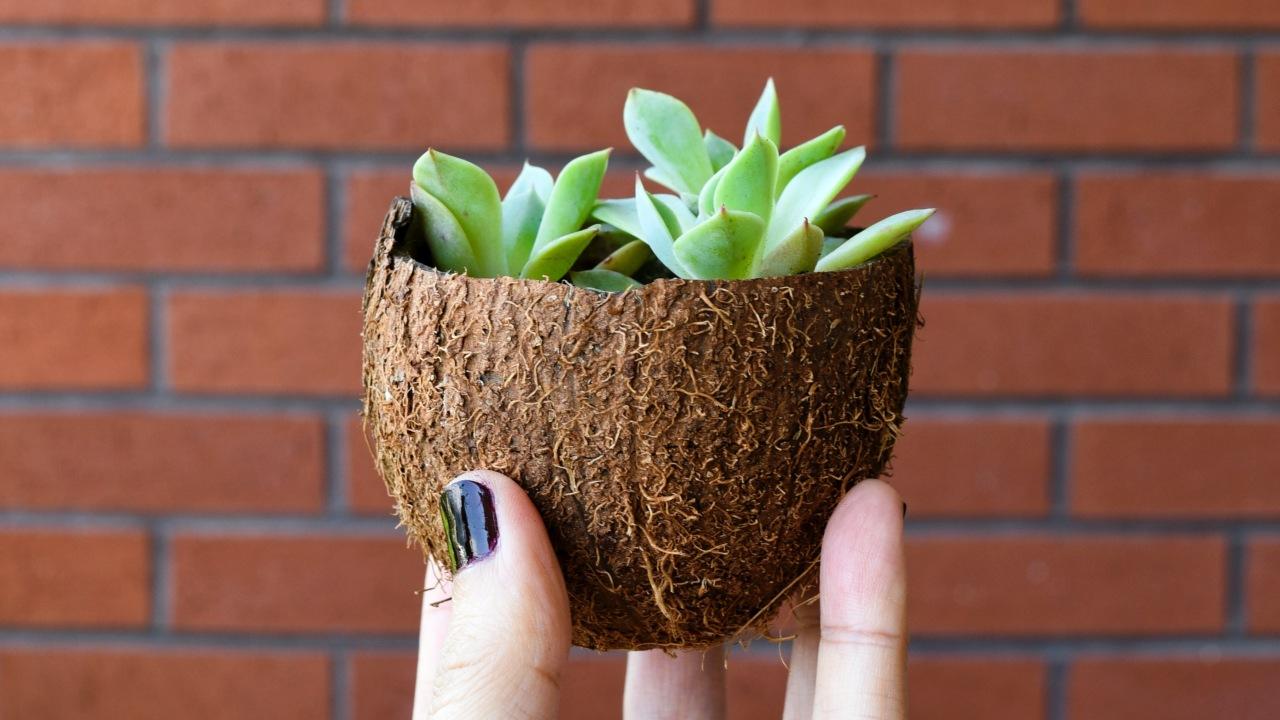 Plantas suculentas para reproducir