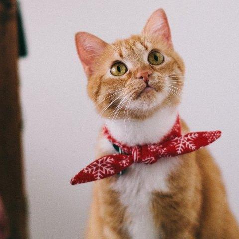 nombres de gatos divertidos y originales