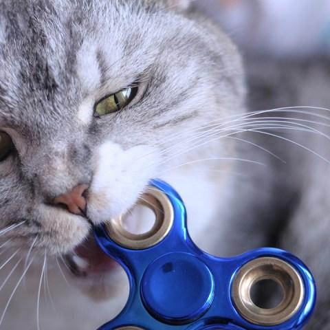 Gato Caricia muerde mascota educación