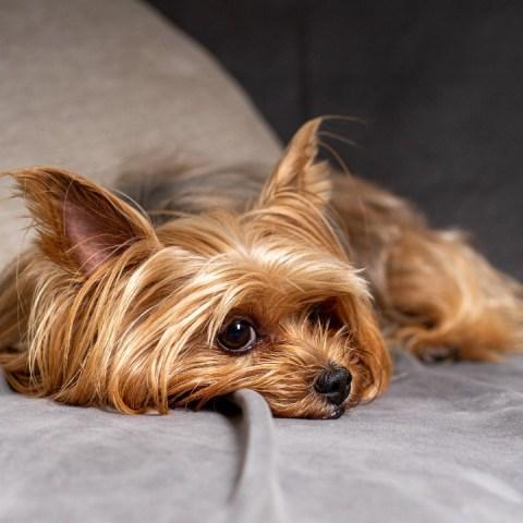 que hacer si necesitas dar a tus perros en adopcion