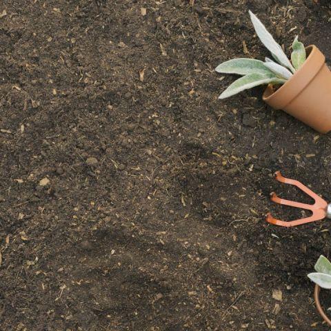 Usos del cal para la jardinería
