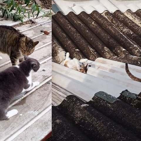 cómo ahuyentar gatos del techo