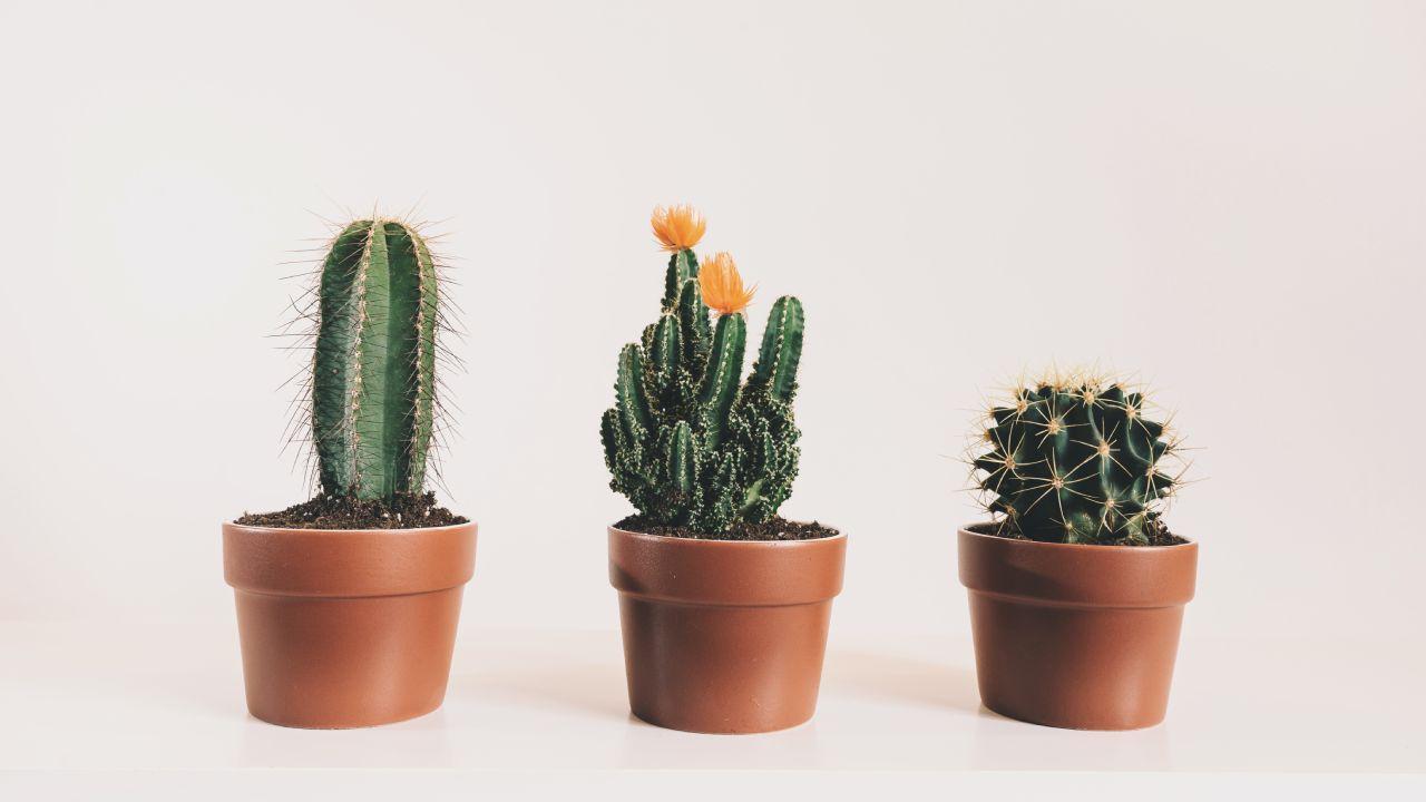 Crea un jardín de cactus con este método