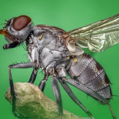 significado espiritual de encontrar moscas muertas