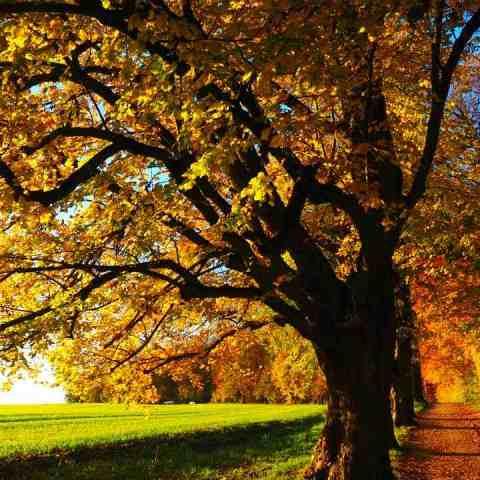 cuando es el equinoccio de otoño