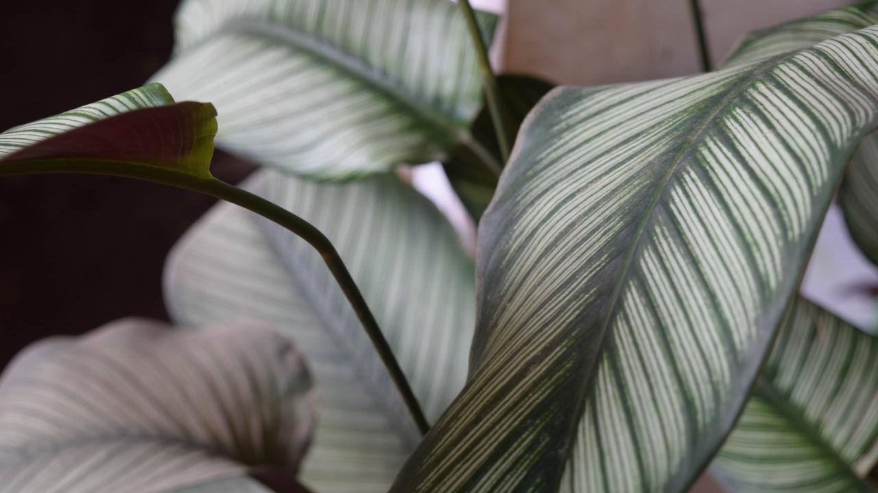 tipos de plantas que no sabes como se llaman