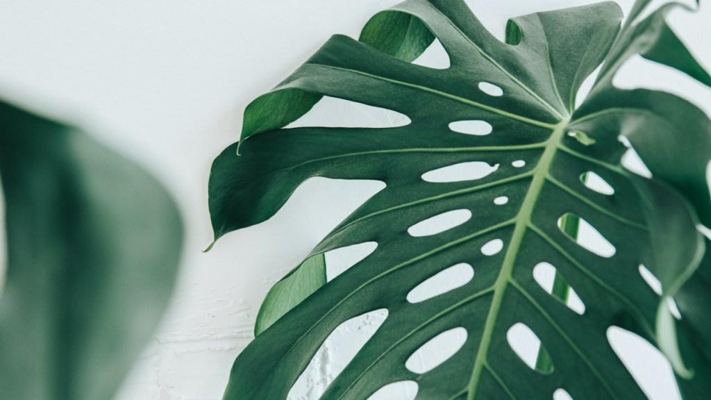 plantas de interior que no sabes como se llaman