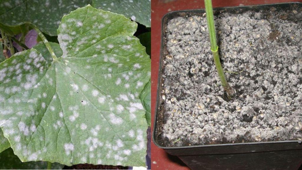 Cómo eliminar el moho blanco de las plantas