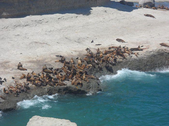 ¡Contemplar las colonias de leones marinos es de lo más entretenido!